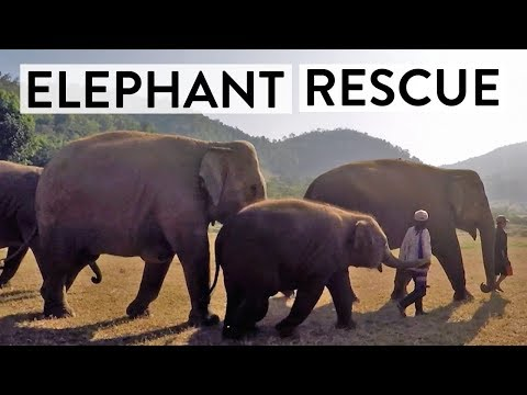 How This Business is Saving Elephant Lives | Doing Good Business