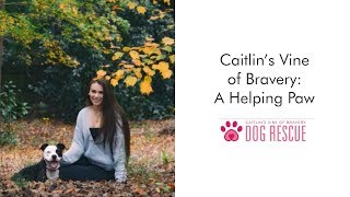 Caitlin's Vine of Bravery Dog Rescue: A Helping Paw