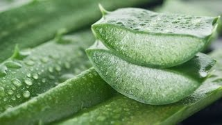 How to Get Rid of Hemorrhoids - Aloe Vera for Hemorrhoids