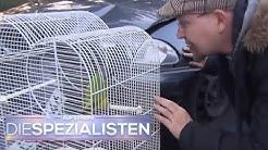 Papageien-Krankheit: Gefährliche Infektionskrankheit bricht aus! | Die Spezialisten | SAT.1 TV