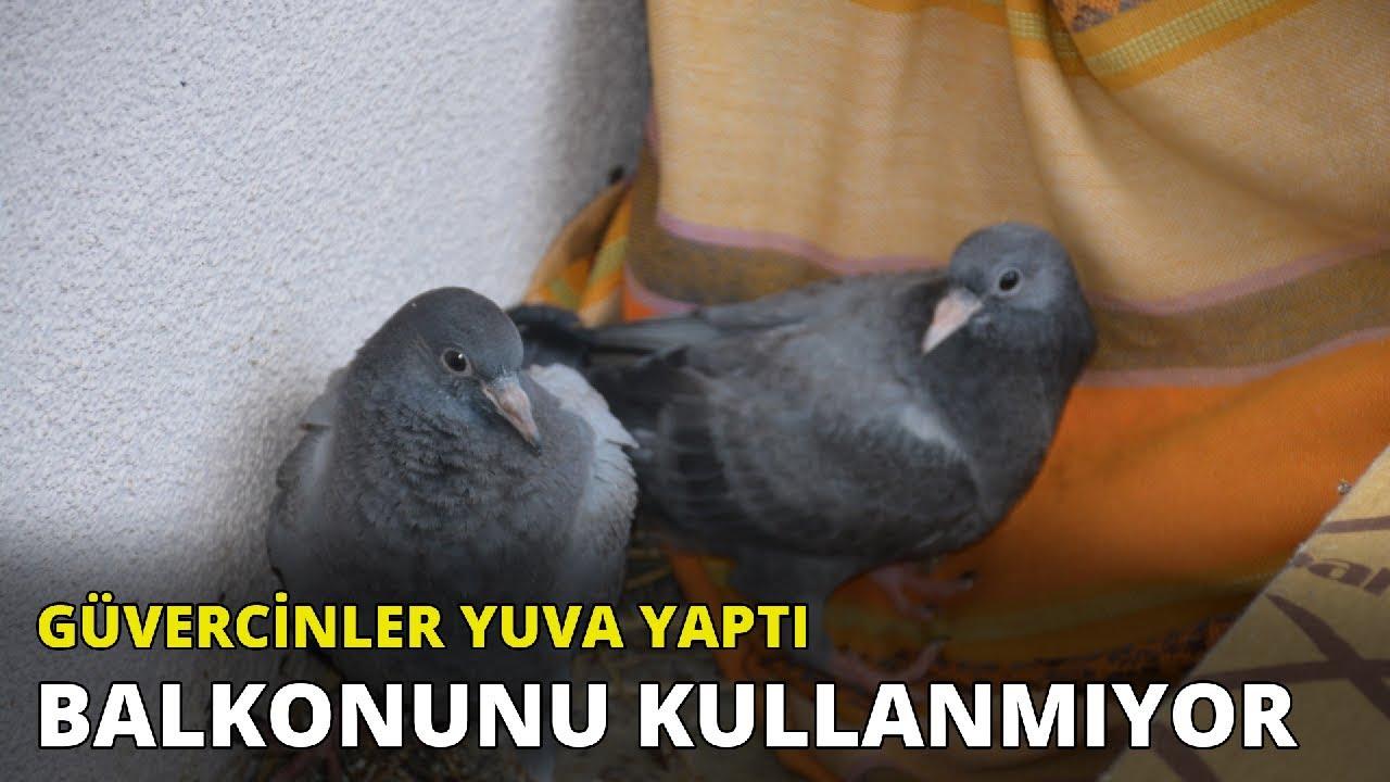 Güvercinlerin yuva yaptığı balkonunu kullanmıyor