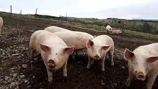 Terroirs de Haute-Loire vous présente le Gaec du Monteil