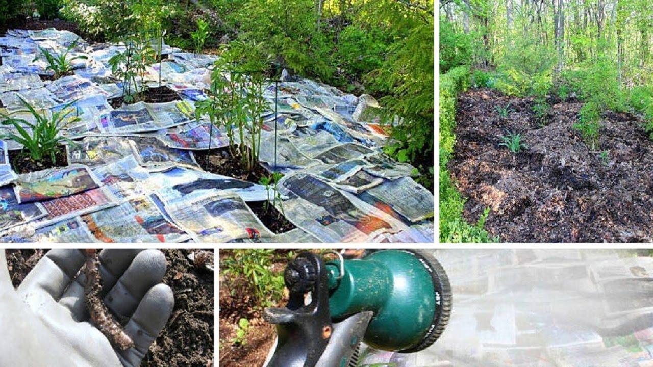 Como mantener limpio tu jard n de malas hierba sin usar for Como mantener un estanque limpio