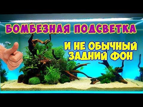Бомбезная подсветка и отличный фон для аквариума