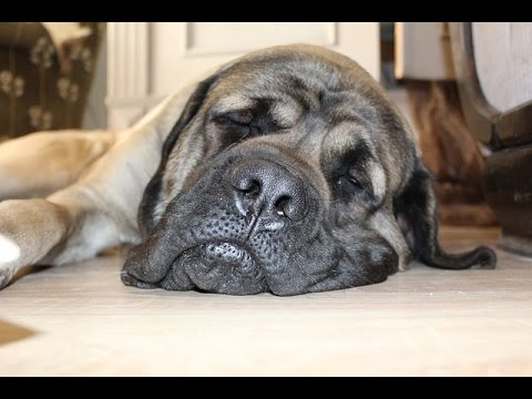 Is My Dog Depressed Dog Depression Signs Amp Symptoms