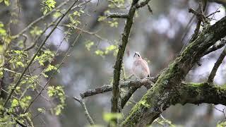 Eurasian Jay @HARSHA Eurasian Jay #eurasianjay #eurasianjaybird #garrulusglandarius #bordeaux #bordeauxmaville #France #birds #birdstagram #natgeo #natgeoyourshot #natgeofrance #instagram #birds #europe #bordeauxfrance #pessac #canon6dmark2 #canon #canonfrance #tamron #tamron150600mm #tamron150600g2 #wildlife #wild #wildflowers #wildlifephotography #nature #naturephotography
