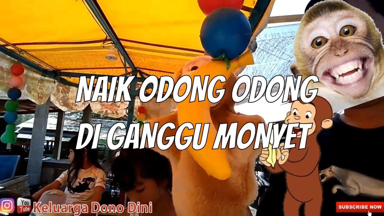 Naik odong odong di ganggu monyet 🐒