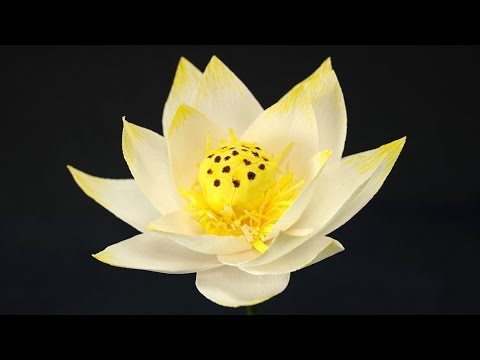 Paper Flower Craft - How to Make Paper Lotus Flower