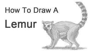 How to Draw a Ring-Tailed Lemur