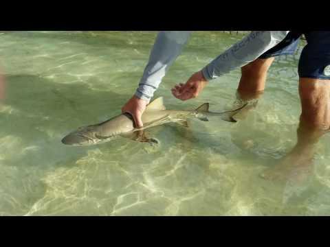 SharkLab Shark Handling Class