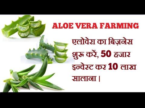 Aloevera Farming Business in India ( एलोवेरा का बिज़नेस शुरू कैसे करें ).