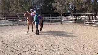 Trick Horse and 6-Year-Old Girl