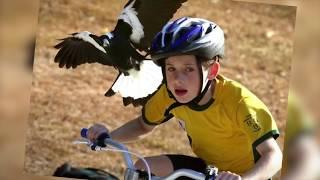 اخطر 10 طيور في العالم .!