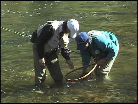 Big Thompson River Beginning Fly Fishing