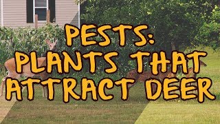 Pests: Plants that Attract Deer