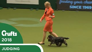 international-junior-handling-competition-second-round-part-2-crufts-2018