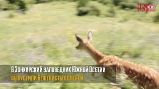 В Зонкарский заповедник Южной Осетии выпустили 6 пятнистых оленей