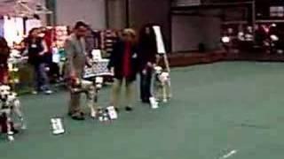 Spec Dalmatian Show :(