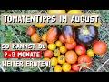 Tomaten Im August - Tomaten Vor Hitze Schützen - Pflegetipps Für Eine Lange Ernte