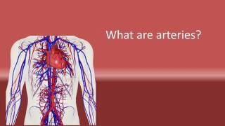 What are arteries ?