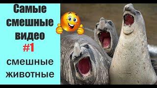 Самые смешные видео/ Попробуй не засмеяться/Тест на психику/Лучшие приколы 2019/Подборки о животных