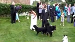 كلب يتبول على العروس   أفلام عربي اون لاين اجنبية مشاهدة افلام مباشرة بدون تحميل اون لاين