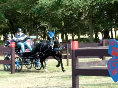 Windsor Carriage Driving Open Single Horse  09