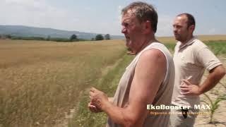 EkoBooster MAX na psenici , Koceljeva 2018. Poljoprivreda - ratarstvo