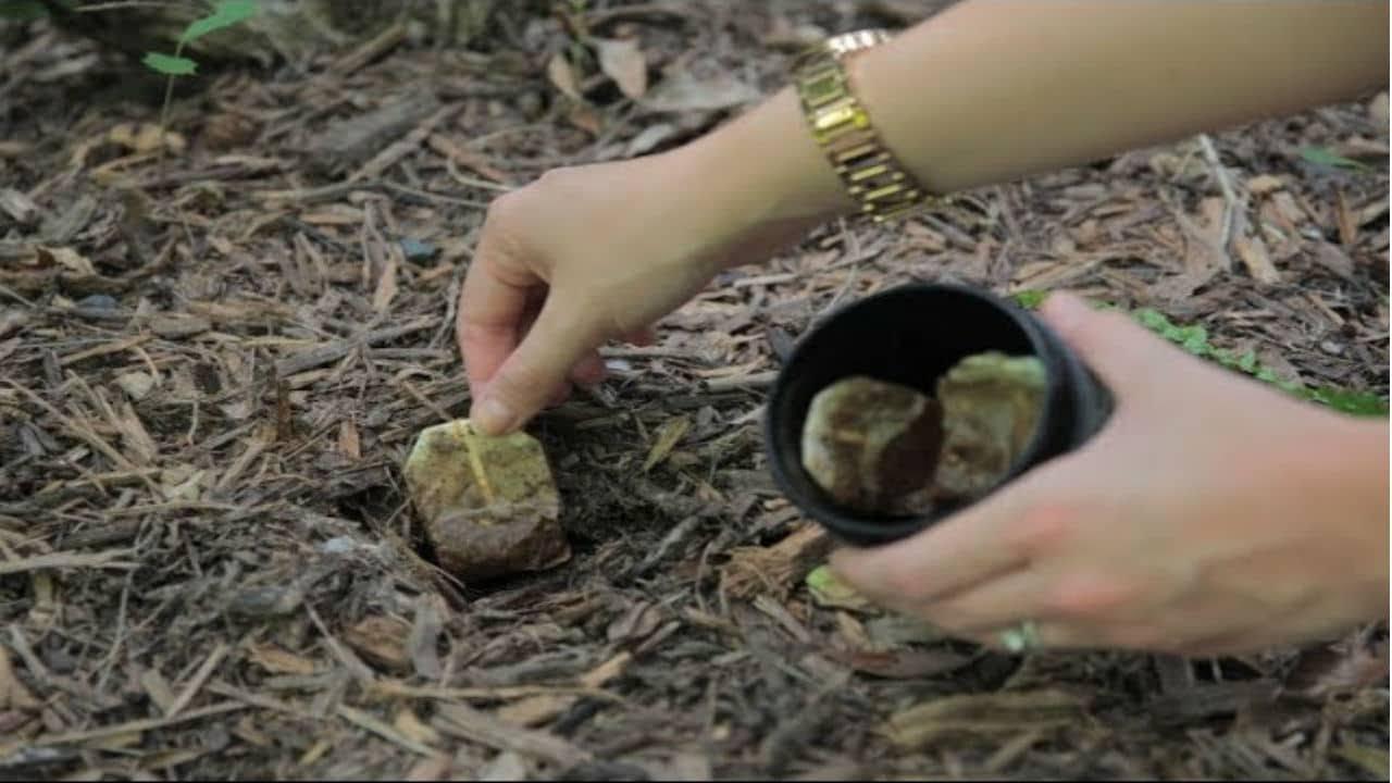 bury tea bags in your garden and this will happen youtube