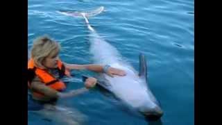 купание с дельфином мармарис турция