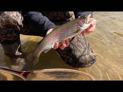 Fly Fishing Ultra Clear Water! (Missouri Trout Fishing)