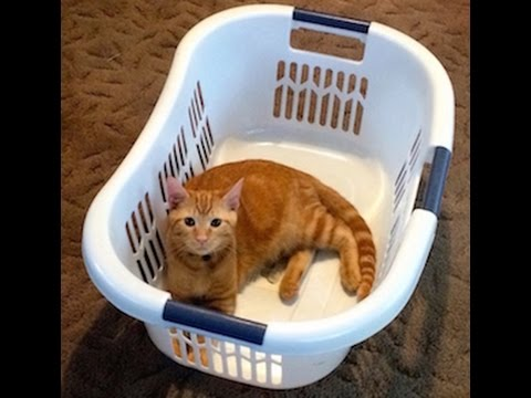 The Hermit Crab Cat Video: A Cute And Funny Kitten Under The Laundry Basket