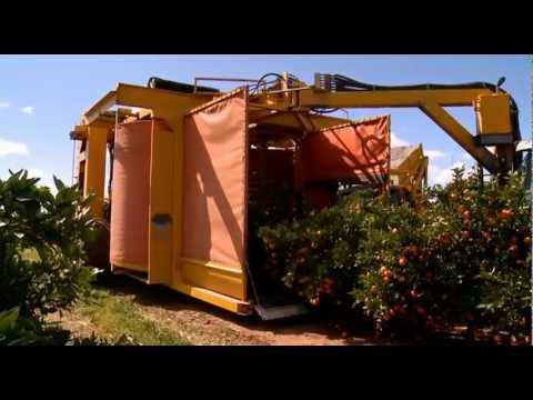 Citrus harvesting in Australia with a Nelson Harvester