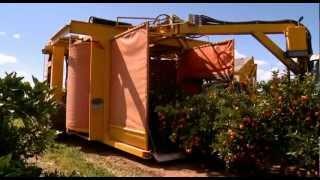 Citrus harvesting in Australia with a Nelson Harvester
