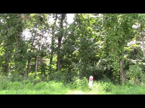 Bigfoot Sighting at the End of Our Driveway; August 3, 2017; #projectgoandsee