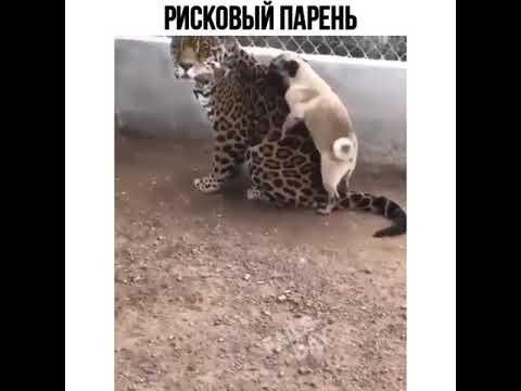 Рисковый парень