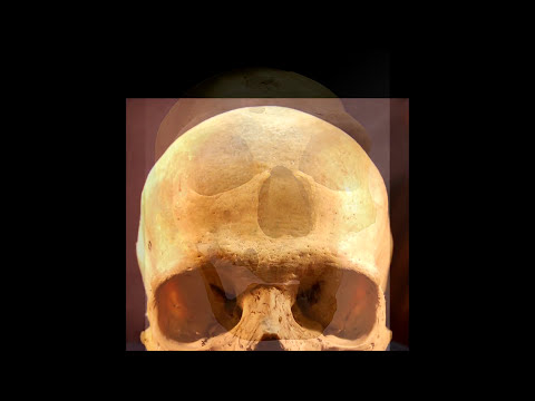 Cranial capacity and intelligence - what's the connection? 2017-01-24