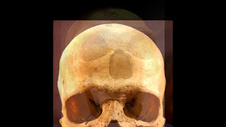 Cranial capacity and intelligence - what