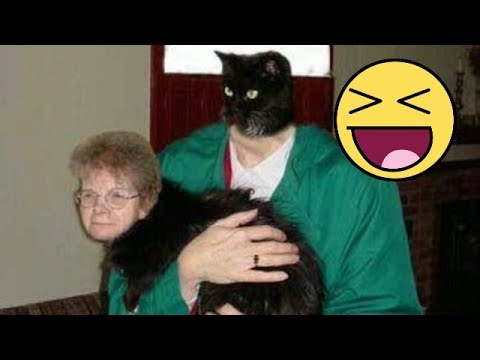 25 Horrifying and Hilarious Animal Face Swaps |Mouse Animal Face Swap