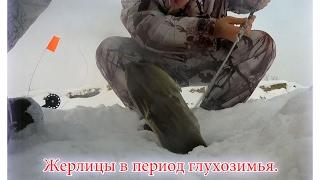 Зимняя рыбалка на жерлицы в глухозимье. От 04 февраля 2017г.