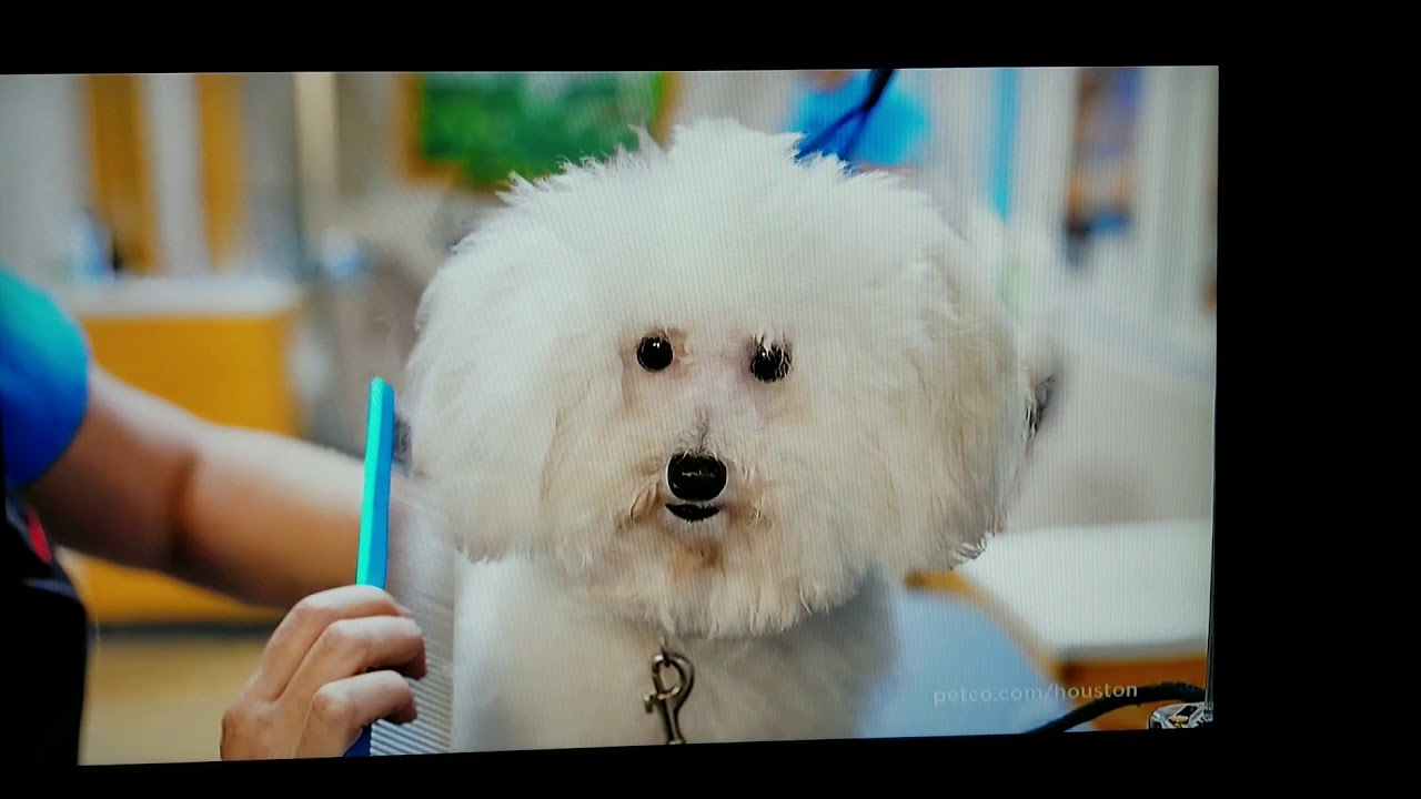 Petco 2018 Grooming Commercial Youtube