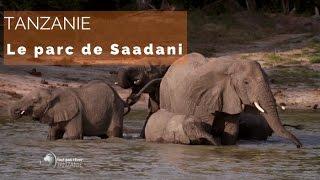 Tanzanie - les animaux du parc Saadani - #fautpasrever