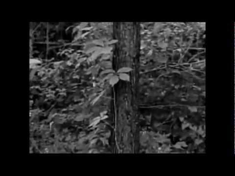 Alice In Chains  Nutshell Legendado