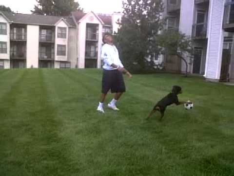 Hassan Makki Playing With His Rottweiler Dog Simba In The U.S