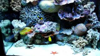 Морской аквариум.avi(, 2011-11-23T04:03:04.000Z)