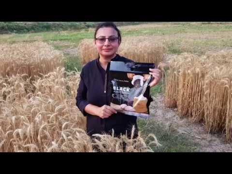 hindi---rare-`shyam-wheat':-black-is-beautiful!