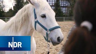 Tierschutz: Die Tierflüsterer | DIE REPORTAGE | NDR Doku
