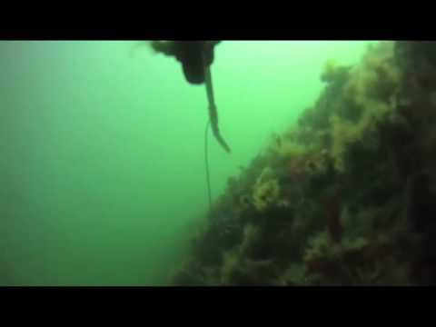 Spearfishing In Imperial Beach, California -produced by Louis Bohan