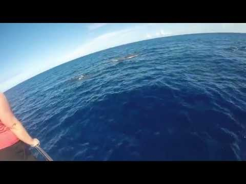 Whale watching in Mauritius