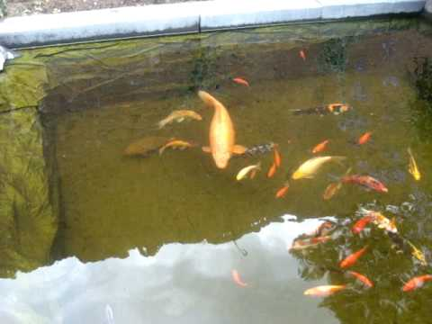 New Koi Pond With A Heliofyt Plant Filter Homemade 2 Youtube